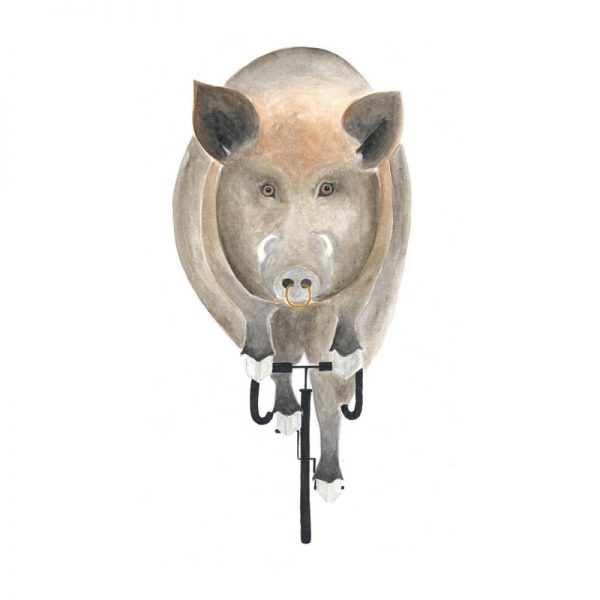 Wildschwein auf Fahrrad Rennrad Schwein