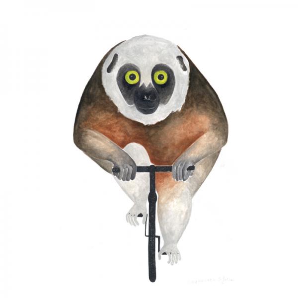 Sifaka-Lemur-Affe-Rennrad-Fahrrad-Tierbild-Aquarell-Illustration