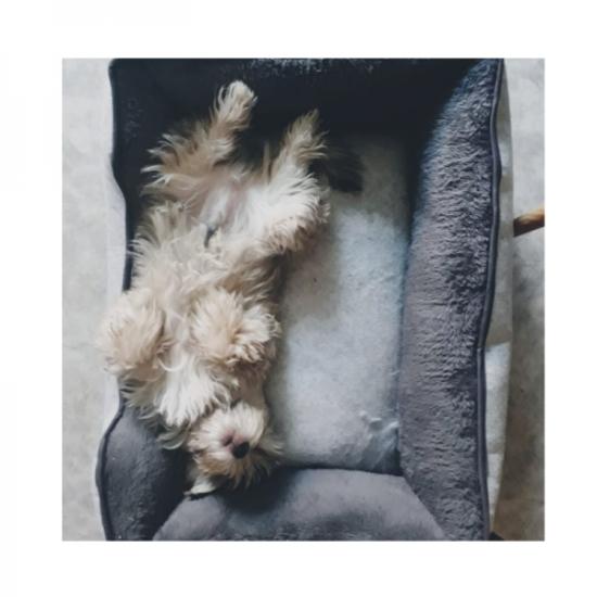 Rest-and-Play-Hund-Momo-Ausruhen-Innehalten-Gleichgewicht-Ruhe