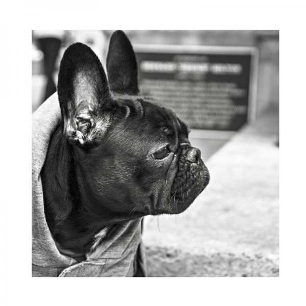 Molly-dog-hund-bulldogge-poem-gedicht-spielen